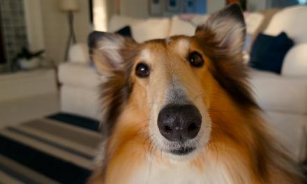 Dobra maszynka dla psa – strzyżenie psa w domu