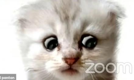 Zoom zamienił prawnika w kota podczas posiedzenia sądu