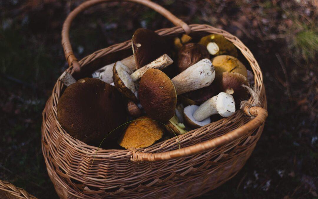 Suszarka do grzybów – jak wybrać dobry dehydrator?